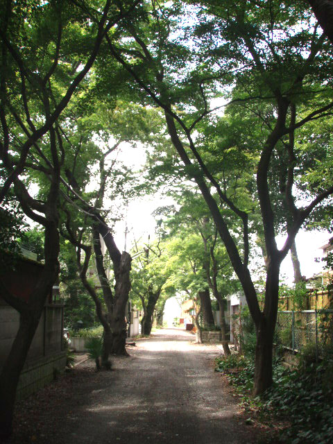 世田谷百景56番 桜と紅葉の並木道